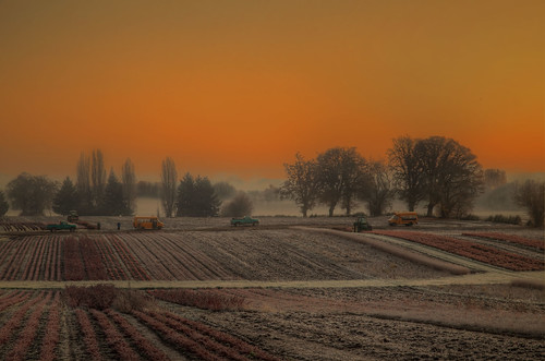 cold sunrise landscape early workers frost farming equipment vehicles 1001nights sauvieisland 1001nightsmagiccity