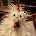 Jellycat Matilda Chicken Stuffed Animal at Red Pearl - Williamsburg, Brooklyn