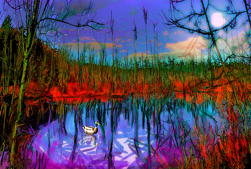 serene landscape november warmth manchester ma usa boardwalk pond photoshop flickr bing google yahoo facebook stumbleupon mask filter paint layer manipulation daum interesting creative color surreal avant guarde image pinterest tinder tumbler unique unusual fascinating art life outside