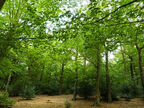 Woodland, Sutton Park