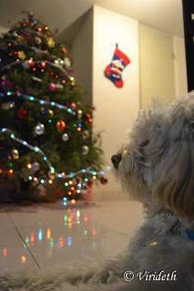 Christmas Time | by Virideth