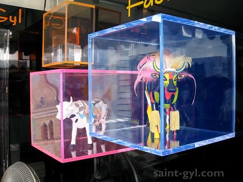 cubes et vitrines 080