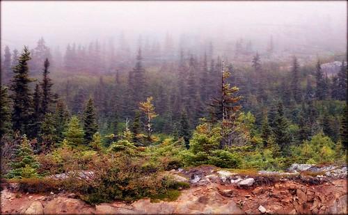 Alaska Landscape - Klondike Highway | by blmiers2