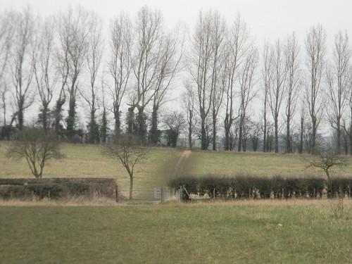 Through trees and a hedge Eynsford Circular