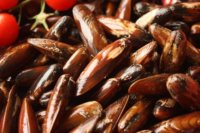 Albanian dattel mussel