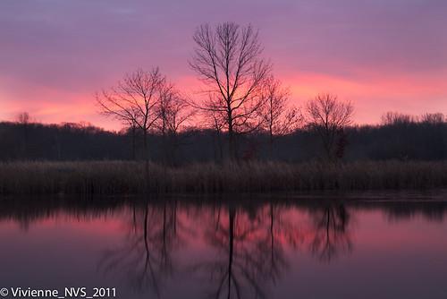 ice sunrise illinois preserves lakecounty halfdayforestpreserve lcfpd halfdaypond