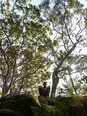 Contemplating Ferns - Forest Island Bushwalk - Royal National Park Sydney