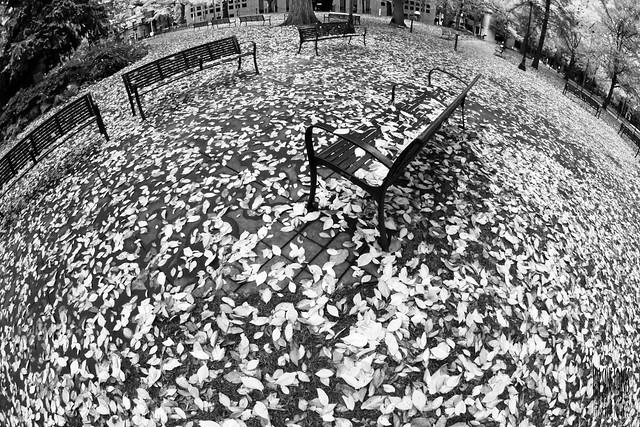 Autumn Planet - (B&W)
