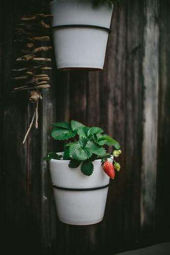 Spring Garden by Eva Kosmas Flores   Adventures in Cooking   by Eva Kosmas Flores