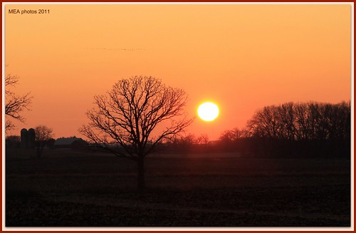 trees orange sun nature yellow wisconsin canon silhouettes 1001nights sunsetting canoneos60d 1001nightsmagiccity