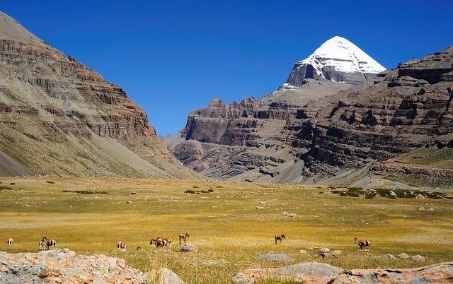 Tibetan wild ass