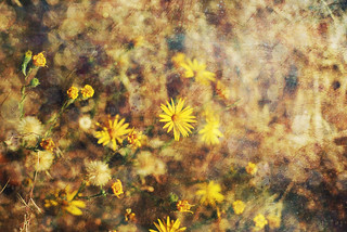 Yellow Flowers Textured | by Le.Sanchez