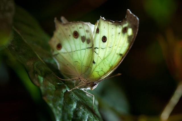 Butterfly Palace 8991