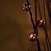 Reed Lights (34/365)