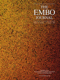Our ratiometric E coli in the cover of EMBO Journal | by Fernan Federici