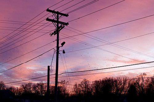 winter sunset sky indiana bloomington crows murderofcrows