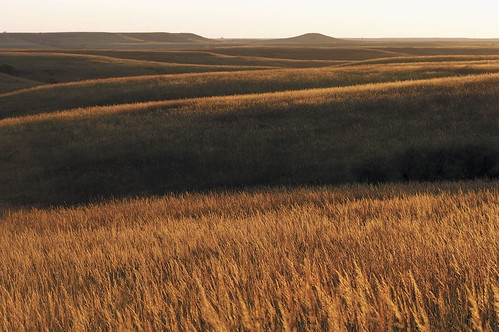 golden konza tallgrass prairie | by USFWS Headquarters