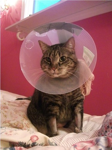 im_home_with_cone
