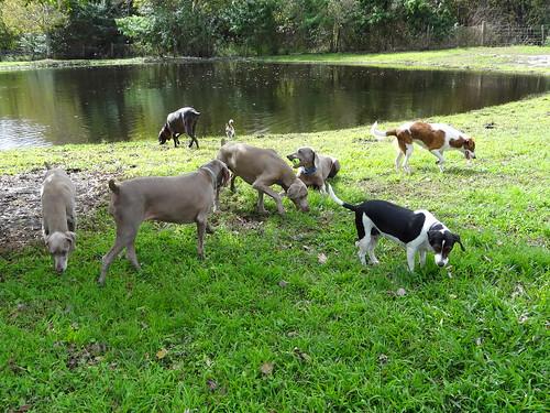 rescue pets dogs animals florida property adoption dogrescue