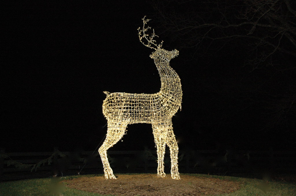 Deer Light At Martin Viette Terri Needham Flickr