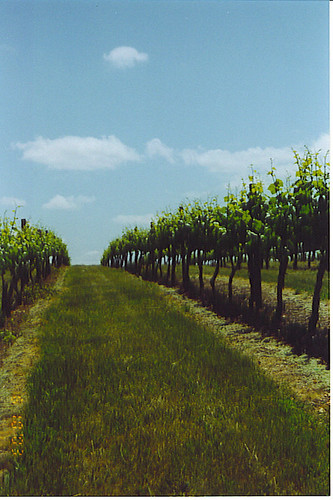 vineyard wine willamettevalley travelsalem namastevineyards