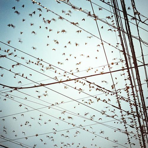 birds | by toshi*