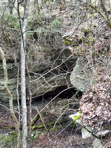 virginia cave isopod leecounty