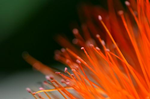Flower (Macro Photography) | by Rodrigo Soldon Souza
