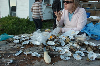 What oyster population?   by sondy