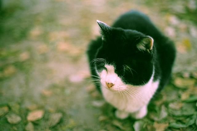 Tuxedo cat / 村山くん