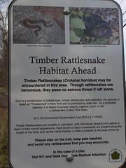 日, 2011-12-25 13:55 - Rattlesnake
