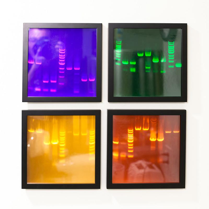 PCR Gel Electrophoresis as Art!