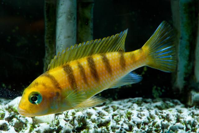 Fishies 2281