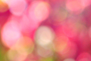 bokeh, large pink | by tonnycdl