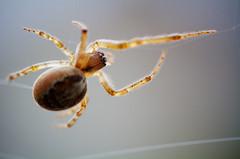 Photograph: Building a web