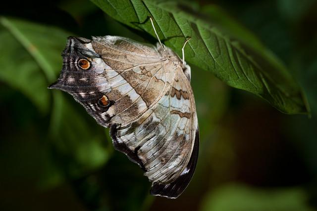 Butterfly Palace 8986
