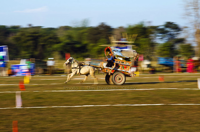 Horse cart race