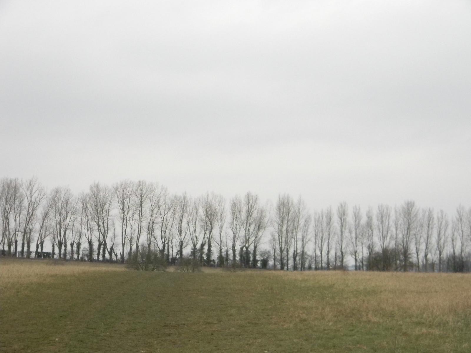 Trees on the skyline Eynsford Circular