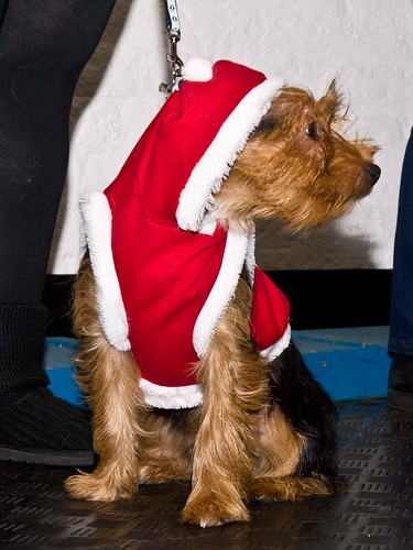 Christmas Party 2011 | by Chadkirk Dog Training Club