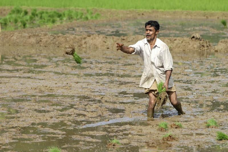 Setev riža