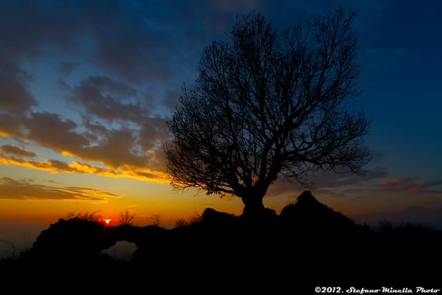 233/365 [365 Project] - Tree Siluette Sunset