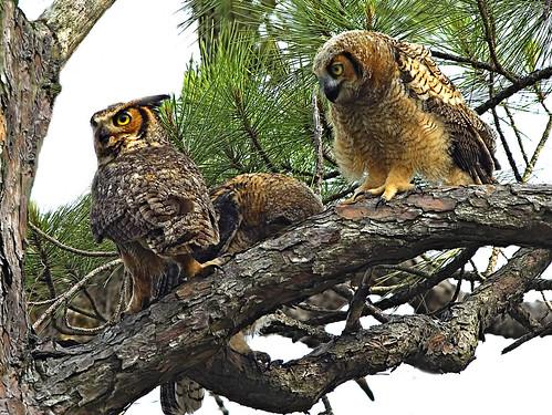 3 Owls | by 2Deye