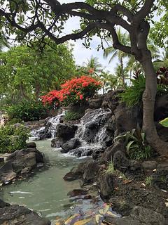 Honolulu -Joe 6   by KathyCat102