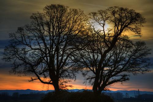 trees silhouette oregon sunrise landscape island scenic vista 1001nights sauvie flickrduel