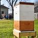 Intro to Beekeeping - Jan 21, 2012