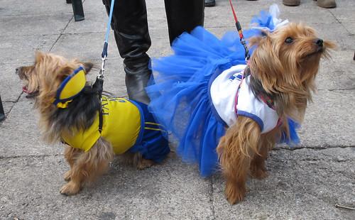 Fotos Carnaval Canino 2012 Las Palmas de Gran Canaria | Flickr