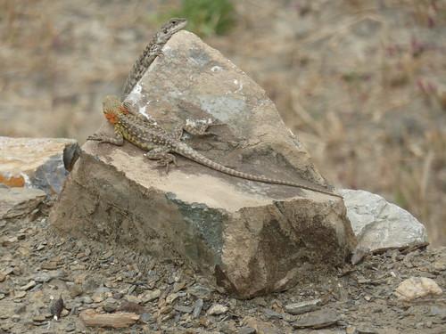 Wanla - reptiles