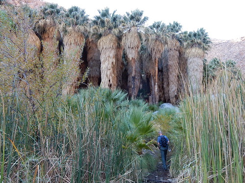 Borrego Palm Canyon Trail - oase - 2
