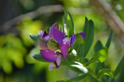 (13) Le Parc du Mugel et son jardin exotique - La Ciotat 32302198494_7fab3b4545