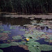 Říčka Narew severně od Grabarky, na kánoi tzv. malou polskou Amazonkou, foto: Petr Nejedlý